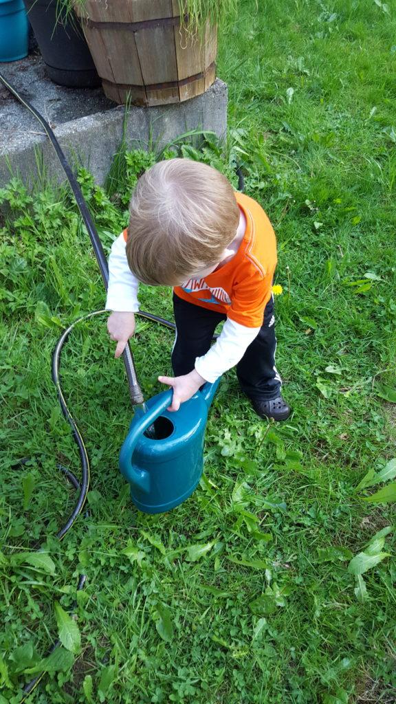 Watering his garden